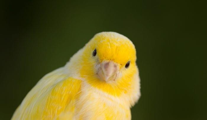 Find the Canary in Your Data: Data Mining Techniques for Non-Analysts