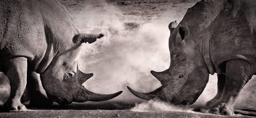 sugarCRM vs salesforce battle of the CRMs